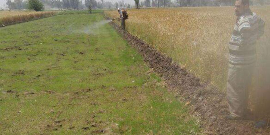 زراعة الشرقية تزيل شتلات الأرز بالمناطق المحظورة تنفيذ لقرار وزير الري