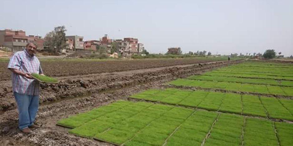 رئيس قطاع توزيع مياه النيل: أرحب بالعودة لزراعة الأرز  في الصواني