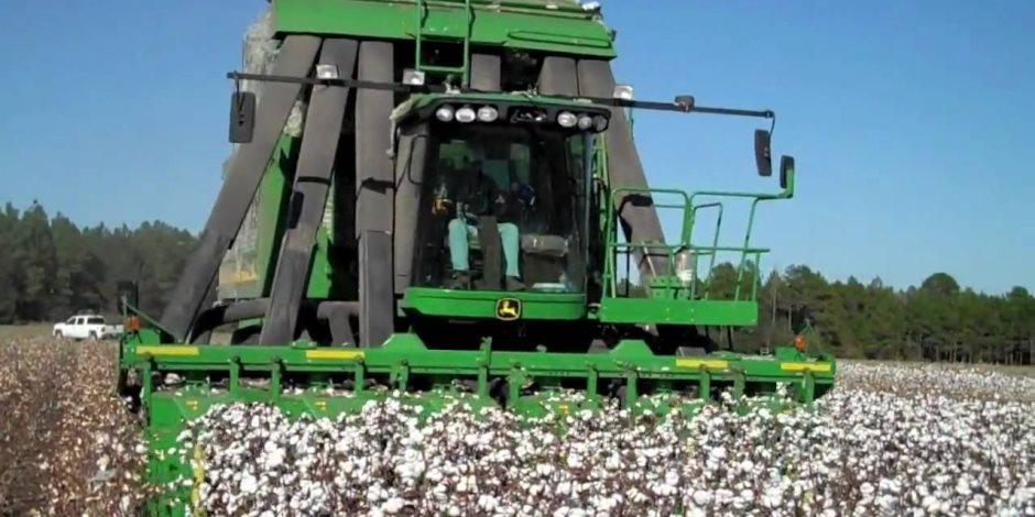 أهم التوصيات الواجبة للعناية بمحصول القطن من البذرة إلى اللوزة