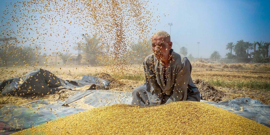 نسبة الأرجوت ضعيفة.. الزراعة: الإفراج عن شحنة القمح الروسي بعد غربلتها