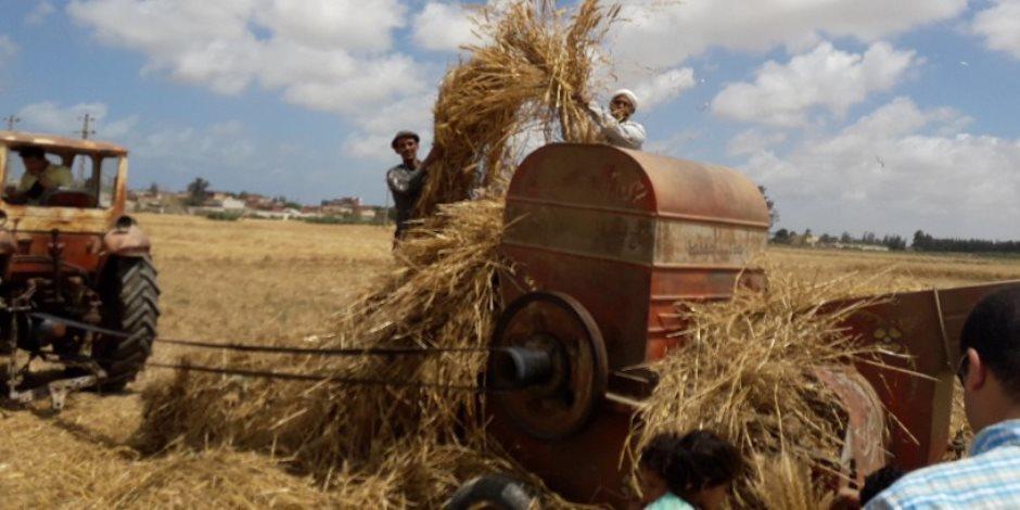 محلي ولا مستورد.. كيف تواجه الحكومة أزمة محصول الأرز هذا الموسم؟