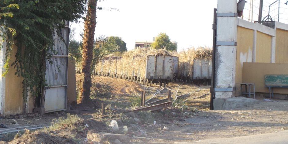 مزارعو القصب بأسوان يطالبون مصنع السكر بصرف مستحقاتهم بعد انتهاء التوريد