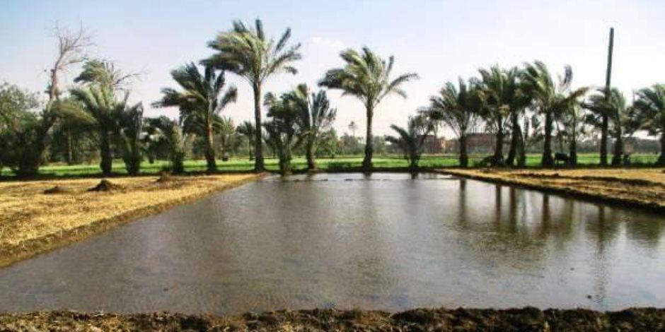 إزلة 51 فدان أرز شتلات وبدار منزرعة بالمخالفة فى الشرقية (صور)
