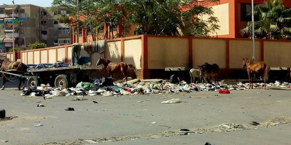 أهلا بكم في «اسطبلات الحمير».. مدارس بورسعيد سابقا (صور)