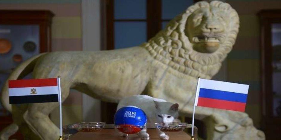 فيديو| وتحققت النبؤة.. حيوانات توقعت خسارة المنتخب المصري وخروجه من المونديال؟