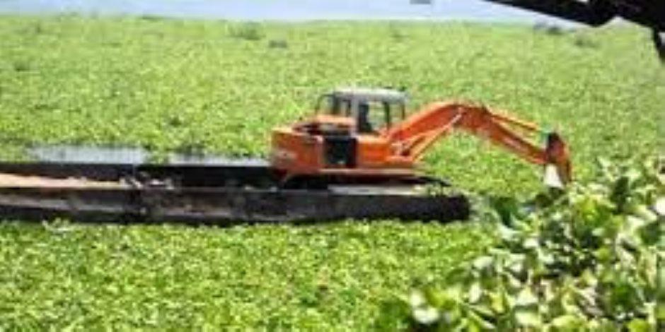 ورد النيل.. من الرش بالمسحوق الأصفر إلى إهدار المياه