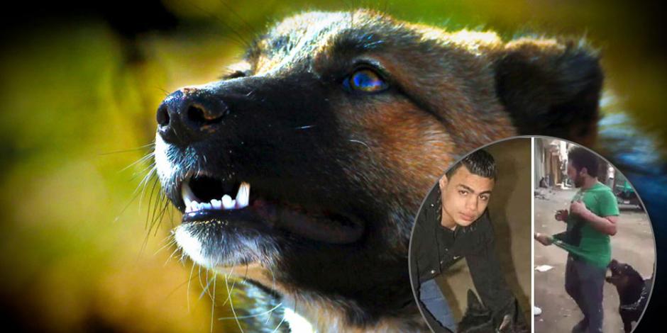 بعد واقعة «سيكا فيصل».. كيف يستعد البرلمان لمواجهة فوضى الكلاب؟