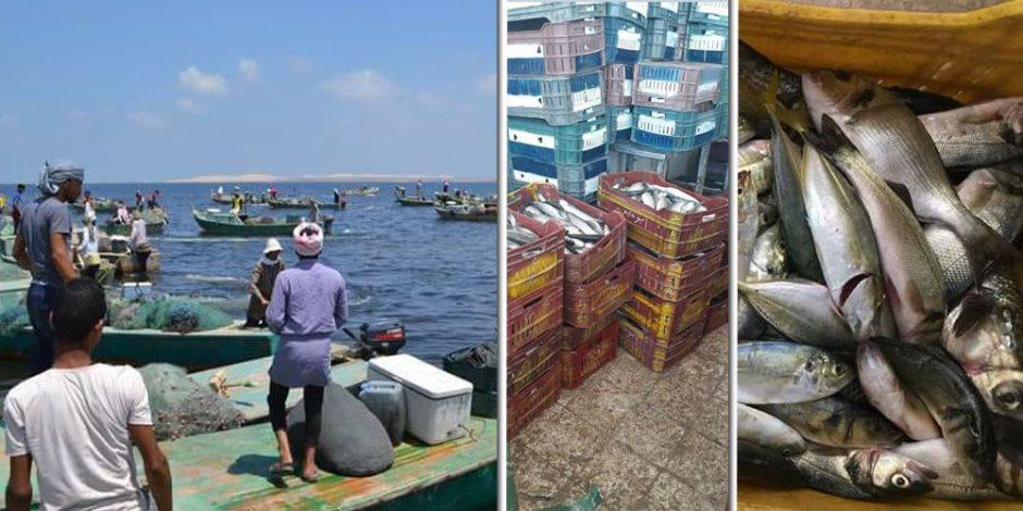 خير بحيرة البردويل: أسماك وفيرة.. وأسعار في متناول الجميع (صور)