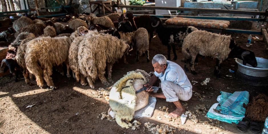 تلطيخ الكفوف بالدماء وصينية الرقاق بالمرقة.. 7 مشاهد من احتفالات المصريين بـ«العيد الكبير»