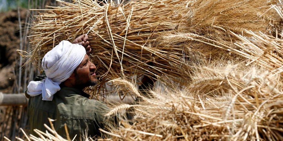 """ماذا قالت """"التموين"""" عن احتياطي مصر من القمح؟"""