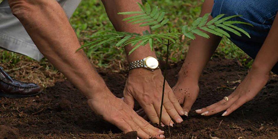 ازرع شجرة وسجلها باسمك في مكتب البريد.. برنامج برتغالي جديد لإنماء الغابات