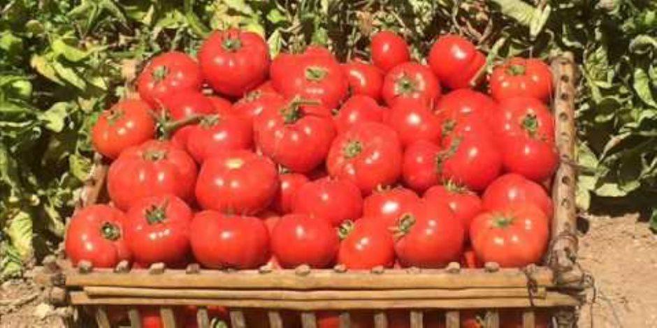 دراسة إسبانية: صلصة الطماطم المطبوخة أفضل من الفاكهة الطازجة
