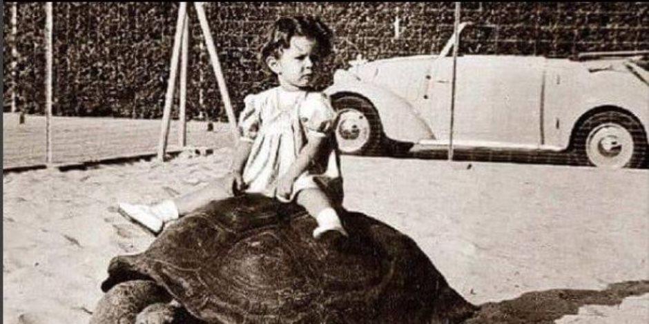 ذكريات الطفولة الملكية.. كيف احتفلت أقدم سلحفاة في مصر بعيد ميلاد الأميرة؟