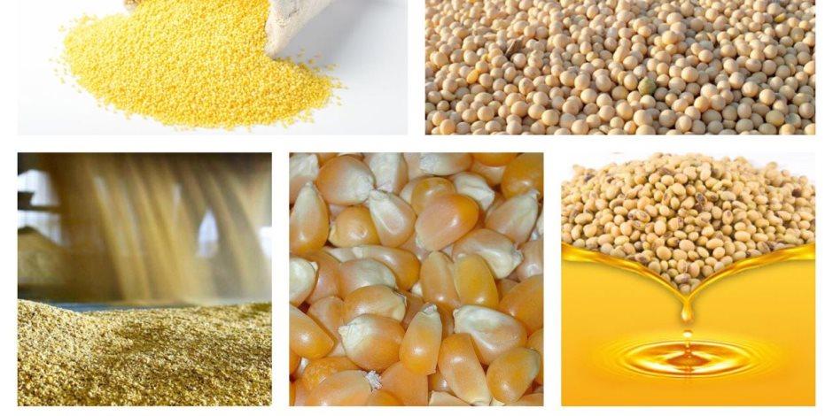 الذرة والصويا أبرزها.. انخفاض أسعار 9 سلع عالميا