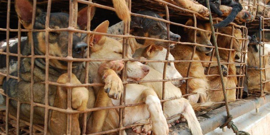 من المسئولين الفيتناميين إلى الشعب: نرجوكم توقفوا عن أكل الكلاب