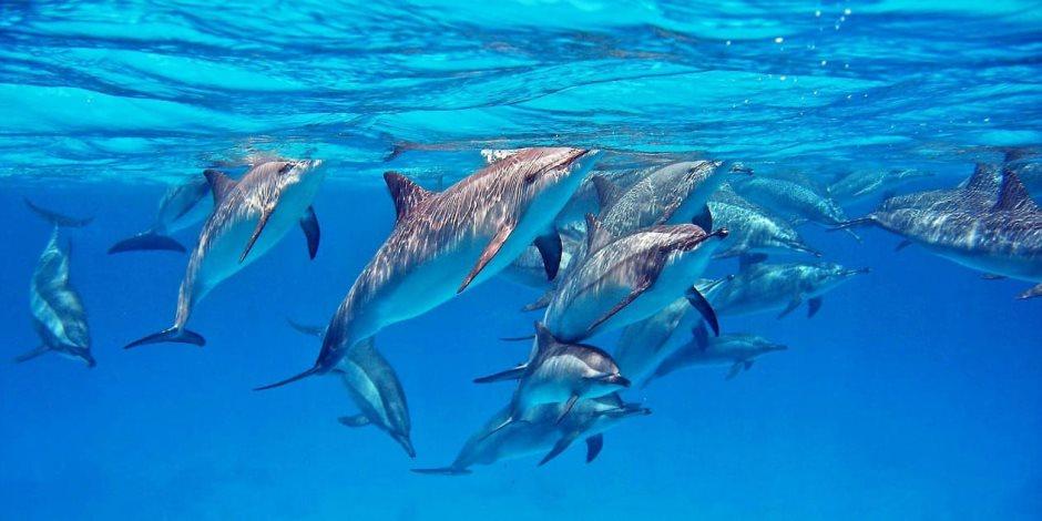 عالم البحر الأحمر.. التنوع البيولوجي ليس ميزته الوحيدة (صور)
