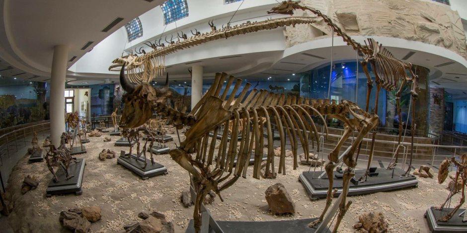 بأدوات صيد الملك فاروق.. الحياة تعود إلى «المتحف الحيواني» بالجيزة (صور)