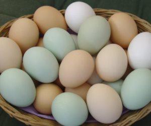 تعرفى أيه عن بيضة الفرخة.. 7 معلومات مهمة قبل ما تشترى وتسلقى