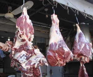 طرح 7 رؤوس ماشية بسعر 75 جنيها للكيلو بديرمواس بالمنيا