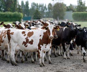 الإنتاج الحيواني يجري معاينات لحظائر مواشي مشروع البتلو بالدقهلية