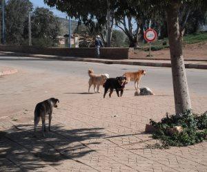 """الخدمات البيطرية: كلاب الشوارع """"عضت"""" 400 ألف مواطن في 2017"""