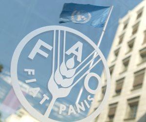 بحوث الاقتصاد الزراعي: بدأنا مشروع تقليل الهدر في المنتجات الزراعية مع الفاو