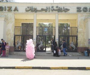 200 ألف زائر حتى الآن.. حديقة حيوان الجيزة تنجح في اختبار عيد الأضحى