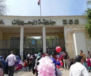 في اليوم الثاني لعيد الأضحى.. حديقة الحيوان بالجيزة تستقبل 50 ألف زائر