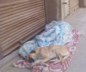 ارحموا «النائمين على الأرض».. هل تكفي إجراءات وزارة التضامن للحد من التشرد في الشوارع؟