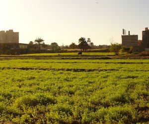ربع مليار جنيه قيمة صادرات المحاصيل بزراعة الإسماعيلية