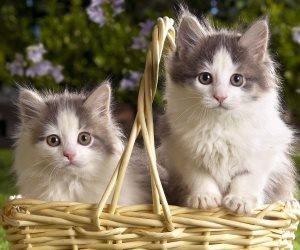 5 حيل تقنع بها قطتك على البقاء فى المنزل لحمايتها من العدوى والأمراض
