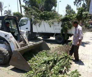 حي غرب القاهرة: تشجير ميدان التحرير وتقليم الأشجار بجاردن سيتى وطلعت حرب