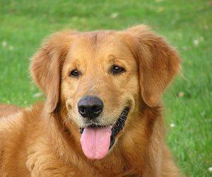لو بتربي كلب في بيتك هتتعلم منه المسئولية والصبر ده غير الحب والحنان