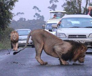 بعد هروب زواحف «الغابة المتحجرة».. تعرف على أخطر 4 حوادث فرار للحيوانات بمصر