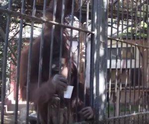 «الآيس كريم والمراوح».. كيف تواجه حيوانات حديقة الجيزة درجات الحرارة المرتفعة؟