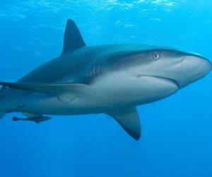 البيئة: مراقبة الشواطئ والقرى السياحية ووضع علامات لزيادة الآمان من القرش