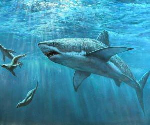 5 نصائح تساعدك على النجاة من هجمات أسماك القرش