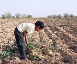 مصر تتجة لإصدار «السندات الخضراء».. فماذا تعرف عنها؟