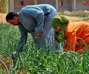 طرق الزراعة والوقاية لـ14 محصول من الخضر في أكتوبر