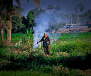 حصيلة غش المبيدات 1.7 مليار دولار في السنة وما خفي أعظم.... من ينقذ الزراعة المصرية؟