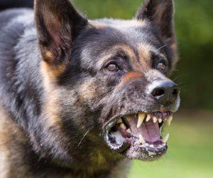 «كلب» يعقر 12 شخصا في طهطا بسوهاج