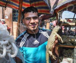 تجارة الحيوانات المفترسة والحشرات السامة تعود من جديد بـ «سوق الجمعة» (فيديو وصور)
