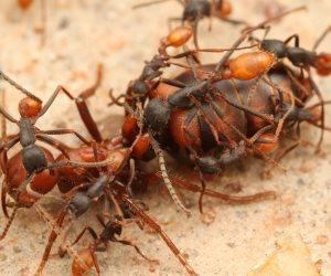 «تخلصي من الملكة وحددي مكان العش».. طرق تساعدك على التخلص من النمل نهائيا