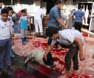 الدين يدين سفاحي الأضاحي.. جرائم في شوارع مصر باسم التدين والعيد