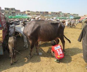 رئيس مركز البحوث الزراعية يطالب برؤية واضحة لصعوبات تحسين إنتاجية الثروة الحيوانية