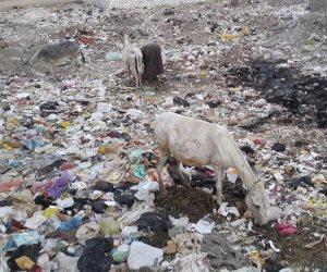 تقسيم أبوجبل في أسيوط مقلب للقمامة منذ 3 أعوام.. وعمال النظافة يخرجون على معاش (صور)
