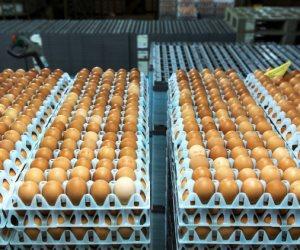 البيض برخصة.. الفريضة الغائبة عن مزارع الدواجن
