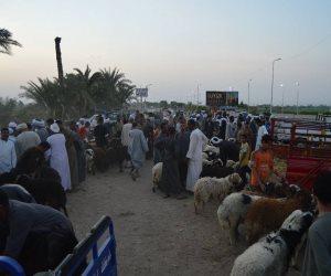 قبل العيد بساعات.. الأهالي يتوافدون علي «سوق المواشي» (صور)