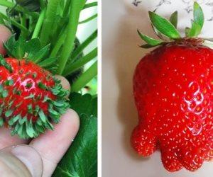 المواد الكيميائية غيرت شكل الخضار والفاكهة .. تعرف على أغرب أشكال الثمار