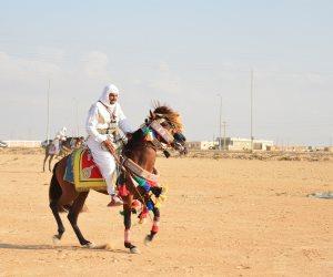 مطروح تنظم مهرجان للفروسية بمنطقة معركة وادي ماجد احتفالا بالعيد القومي